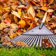 Fall leaves with rake — Stockfoto #16628363
