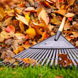 Fall leaves with rake - Stock Photo