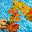 Fall leaves floating in pool — Stock Photo #16628365