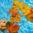 Fall leaves floating in pool - Stock Photo