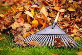 Hojas de otoño con rastrillo — Foto de Stock