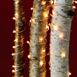 Foto Stock: Christmas lights on birch branches