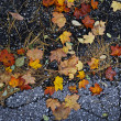 Fall leaves on pavement - Stock Photo