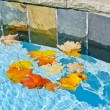 Fall leaves floating in pool — Stock Photo