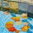 Fall leaves floating in pool — Stock Photo #16942143