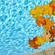 Stock Photo: Fall leaves floating in pool