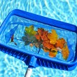 Skimming leaves from pool — Stockfoto
