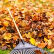 Fall leaves with rake — Stock Photo #16942177