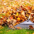 Fall leaves with rake — Stock Photo #16942183