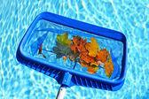 écrémage des feuilles de piscine — Photo