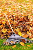 Fall leaves with rake — Foto de Stock