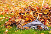 Fall leaves with rake — Foto Stock