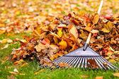 Herbstblätter mit harke — Stockfoto