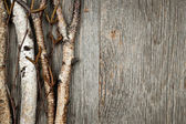 Birch branches background — Stock Photo