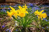 Spring wildflowers — Stock Photo