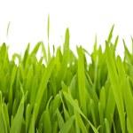 Постер, плакат: Green grass blades border
