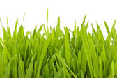 Green grass blades border — Stock Photo