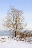 Zimą drzewa na brzegu — Zdjęcie stockowe