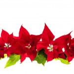 arrangemang med jul julstjärnor — Stockfoto