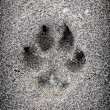 Paw print in sand — Stock Photo