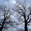 Leafless trees against evening sky — Stock Photo