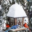 Birds on bird feeder in winter — Stock Photo #27909363