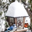Birds on bird feeder in winter — Stock Photo