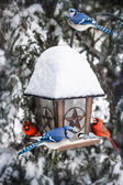 Birds on bird feeder in winter — Foto Stock