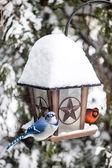 Birds on bird feeder in winter — Stock Photo
