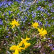 Spring wildflowers — Stock Photo #27910175