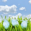 Easter eggs in green grass — Stock Photo #27911807
