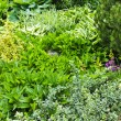 Green summer garden — Stock Photo #27913699