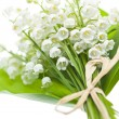 Stock Photo: Lily-of-the-valley flowers on white
