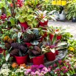 Plants for sale in nursery — Stock Photo #27917389