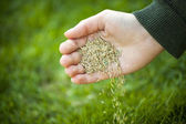 Hand planting grass seeds — Stock Photo