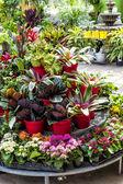 Plants for sale in nursery — Stock Photo