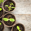 Seedlings growing in peat moss pots — Stock Photo #27925399
