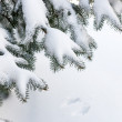 Snow on winter evergreen branches — Stock Photo #27926035