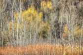 Forest in late fall at Scarborough Bluffs — Stock Photo