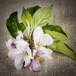 Stock Photo: Apple blossom on linen