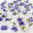 Stock Photo: Candied violets