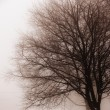 Stock Photo: Leafless tree in fog