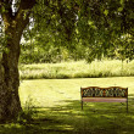 Park bench under tree — Stock Photo