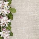 Apple blossoms border — Stock Photo