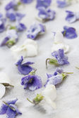 Candied violets — Stock Photo