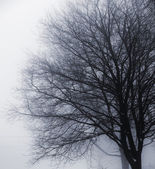Leafless tree in fog — Stock Photo