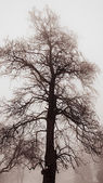 Winter tree in fog — Stock Photo