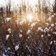 Setting sun in winter forest — Stock Photo #39360301