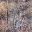 Brown winter forest with bare trees — Stock Photo #39360667