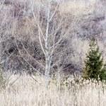 Winter woodland background — Stock Photo